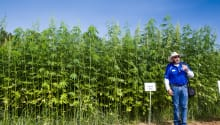 Farmers Bet Big on the South's First Organic Hemp Cooperative